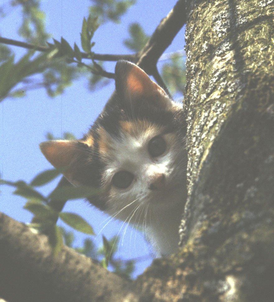chatsboule11.jpg