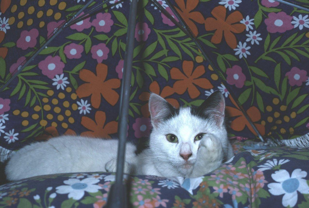 chatsboule15.jpg