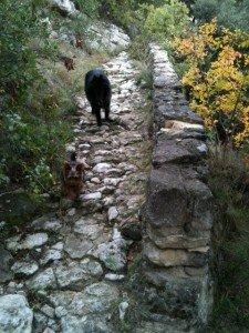 Les vacances d'automne 2012 dans Chiens reglisse-et-galhan_12.11-225x300